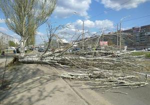 На Донецком шоссе из-за ветра упало дерево: движение затруднено
