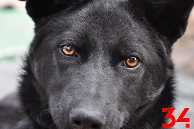Можно ли в Днепре зайти с собакой в магазин или кафе?