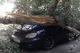 Горсовет Днепра может выплатить сотни тысяч гривен за поврежденные деревьями и выбоинами автомобили
