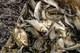 С начала нереста в области задержали почти 300 «черных рыбаков»