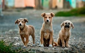 Ветеринары рассказали как помочь бездомным животным