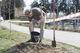 У молодіжному парку «Новокодацький» висадили червону вербу та декоративну сливу