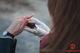 В Днепре на Монастырском острове выпустили более 900 летучих мышей