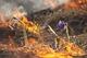Кого жители Днепра и области убивают, сжигая траву