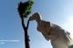 Знаменитую скульптуру кенгуру без ушей из двора по улице Гончара подарили музею