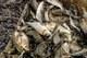 За две недели нереста на Днепропетровщине задержали почти 100 браконьеров