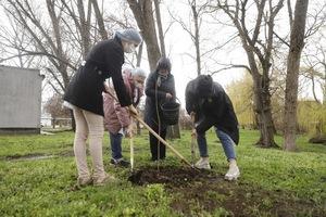 В Днепре на территории городской больницы № 9 навели порядок и высадили деревья