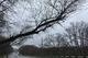 В Днепре жители ж/м Тополь-2 жалуются на аварийные деревья