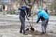 Более полусотни ясеней, берез и рябин посадили  днепряне на ж/м Парус