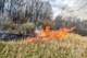 На Днепропетровщине пожарные ликвидировали возгорание сухой растительности