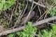 В Днепропетровской области пиротехники ГСЧС уничтожили устаревшие артиллерийские снаряды