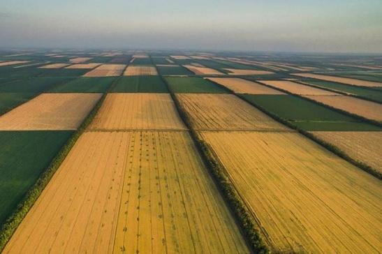 В Украине скоро откроют рынок земли: что нас ждет?