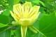 В ботсаду Днепра высадят 200 видов новых растений