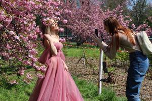 Днепряне наслаждаются цветением сакур