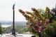 Еще одна аллея сакур зацвела возле монумента Славы