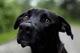В селе под Днепром женщина пыталась зарубить топором пса, чтобы отомстить сожителю