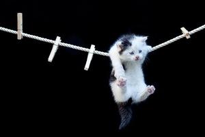 В Днепре спасли кота, который прятался от пожара на бельевой веревке (видео момента)