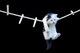 У Дніпрі врятували кота, який ховався від пожежі на  мотузці для білизни   (відео моменту)