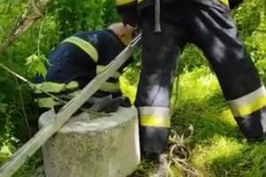 У Дніпрі рятувальники дістали чотирилапого з покинутого комунікаційного колектору