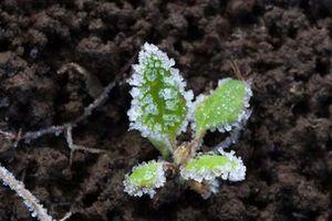 У Дніпрі та області очікується зниження температури: заморозки на поверхні ґрунту