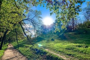 Сказочная страна Оз: в Днепре весна преобразила тоннельную балку