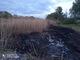 На озере Курячем экокатастрофа