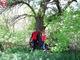 На Днепропетровщине обнаружили уникальные деревья