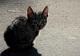 Жестокий бизнес: как в Днепре наживаются на котятах и щенках