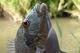 В Днепре рыбак поймал экзотическую рыбку