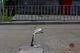Между плитами вылез уплотнитель: в Днепре на Крестьянском спуске «устал» новый ремонт