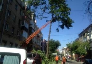 Геноцид деревьев в Днепре возобновился