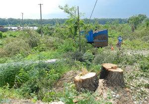Почему на Набережной Победы массово вырубили деревья