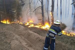 Лесам Днепропетровщины угрожают масштабные пожары!