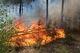 Через найвищий клас пожежної небезпеки мешканцям Дніпропетровщини заборонили відвідувати ліси