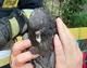 В Днепре спасатели освободили голубя, запутавшегося в проводах