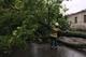В Днепре упавшее 15-метровое дерево перегородило движение по важной улице