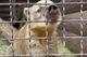 Чуть не погибла в контактном зоопарке: волонтеры из Днепра спасают носуху