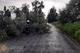 На Днепропетровщине спасатели убирают аварийные деревья, упавшие в результате непогоды