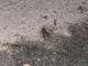 В днепровском парке Глобы по аллеям разгуливают десятки жаб