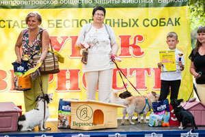 2 сентября праздник беспородных собак