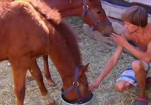 Днепровские волонтеры с помощью соцсетей спасли двух лошадей