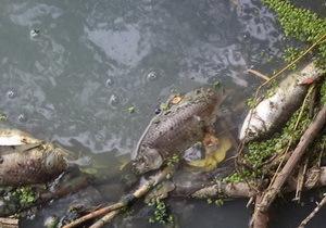 Каменское водохранилище превращается в болото