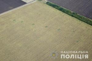 На Днепропетровщине полицейские обнаружили среди полей с подсолнечником 20 участков с коноплей