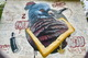 В Днепре на Победе появился новый яркий мурал с голубем