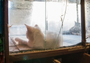 В Днепре хозяйке зоомагазина грозит штраф за жестокое обращение с животными