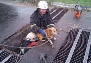 На Днепропетровщине спасатели освободили собаку из ливневой системы