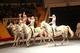 «Цирковой квартал». 21 сентября в Днепровском цирке стартует новый сезон