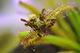 В Днепре покажут хищные растения