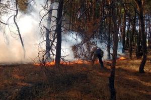 В Днепропетровской области ликвидировали пожар в лесном массиве