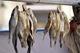 Ботулизм в рыбе – погибла 58-летняя женщина